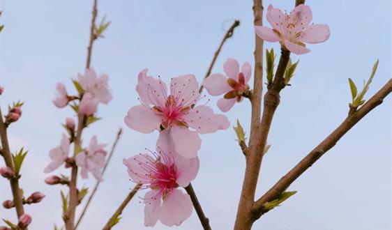 春节将至腊味飘香 自动灌肠机为腊肠加工添色